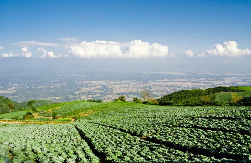 Het grote landbouwbedrijf van de Kool op de berg stock fotografie