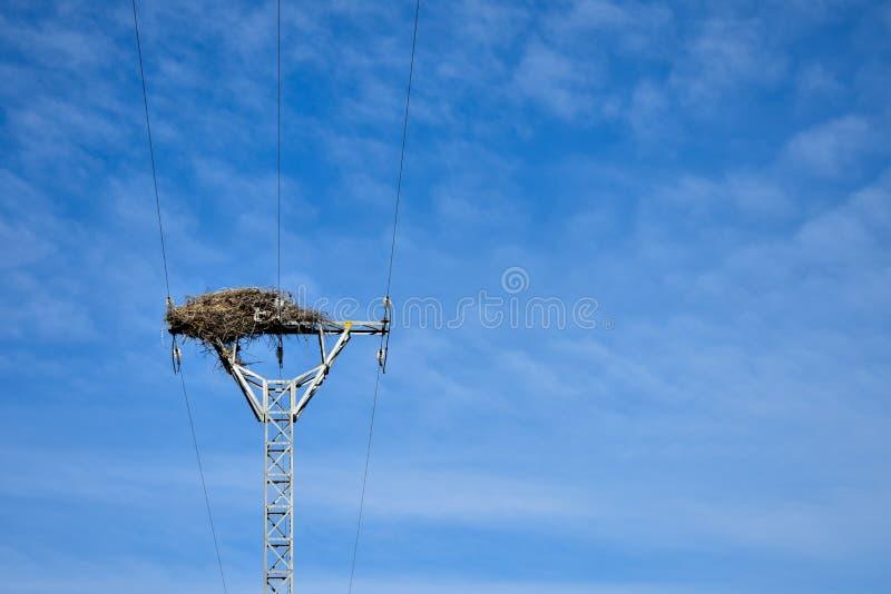 het grote nest maakte met takken van bomen bij de bovenkant van een elektrotoren van hoogspanning die elektriciteit aan huizen in stock foto