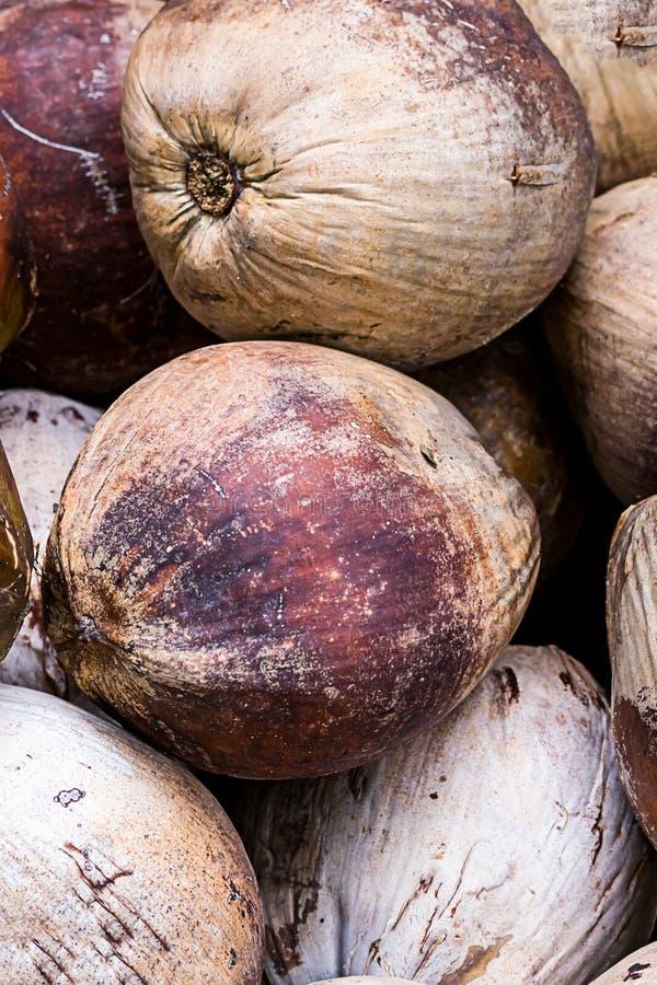 Het grote rijpe kokosnotenvruchten bruine ovale exotische ontwerp Thailand Vietnam van het notenclose-up royalty-vrije stock fotografie