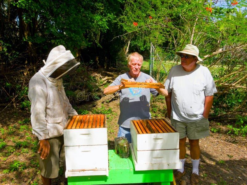 Het halen van honing bij een bijenstal op bequia royalty-vrije stock afbeeldingen