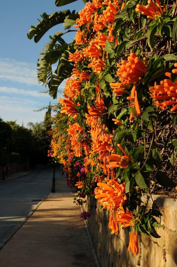 Het hangen Oranje bloemen het bloeien wintertijd stock foto