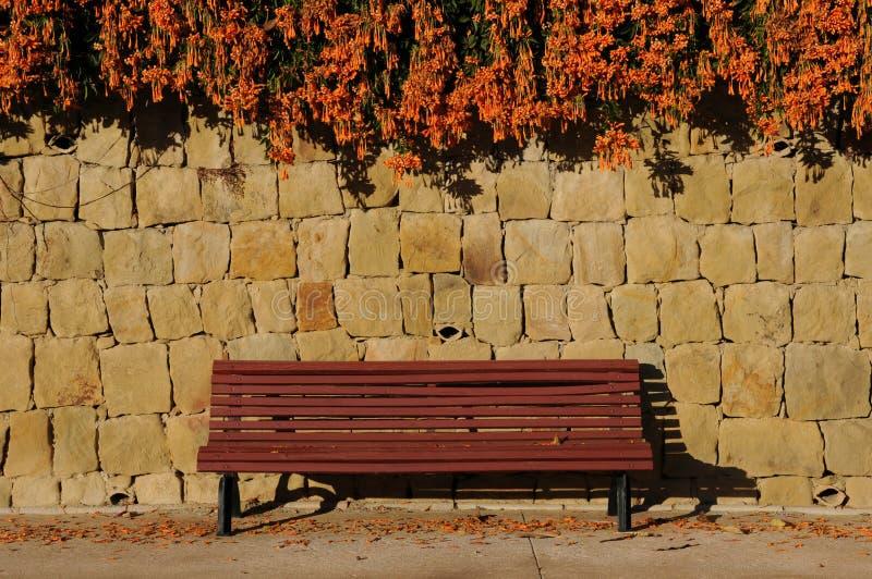 Het hangen Oranje bloemen het bloeien wintertijd over een rode bank stock afbeeldingen