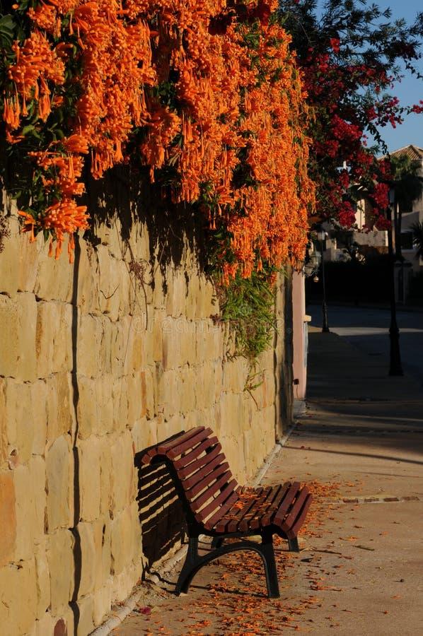 Het hangen Oranje bloemen het bloeien wintertijd over een rode bank stock foto's