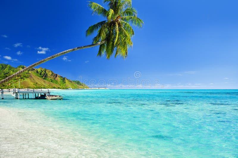 Het hangen van de palm over lagune met pier stock foto's