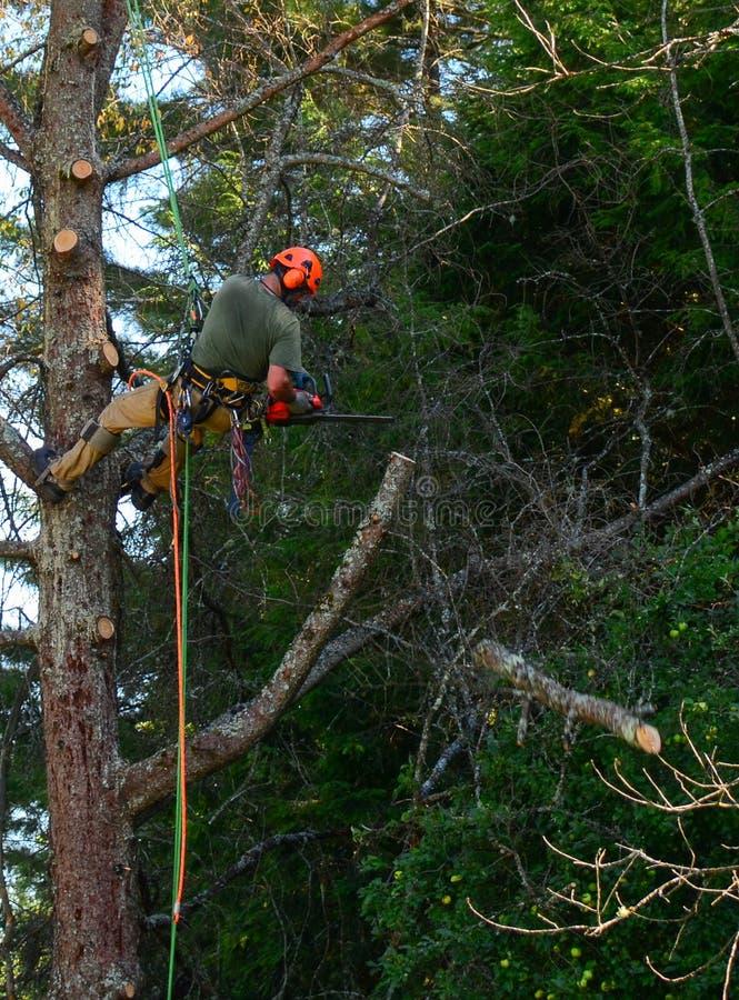 Het hangen van de scherpe lidmaten van de boomsnijder van boom stock afbeeldingen