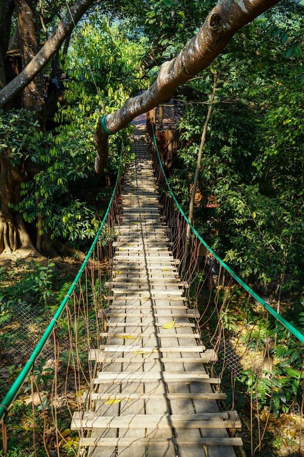 Het hangen van houten brugweg door de grote wildernis van de boomtak met kabelspoor, boombladeren en installatieschaduw stock afbeelding
