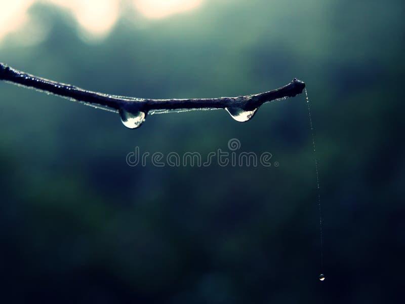 Het hangen waterdaling door spiderweb royalty-vrije stock foto's