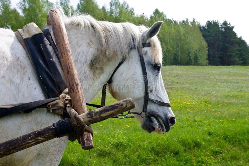 Het harde werken van het paard stock afbeeldingen