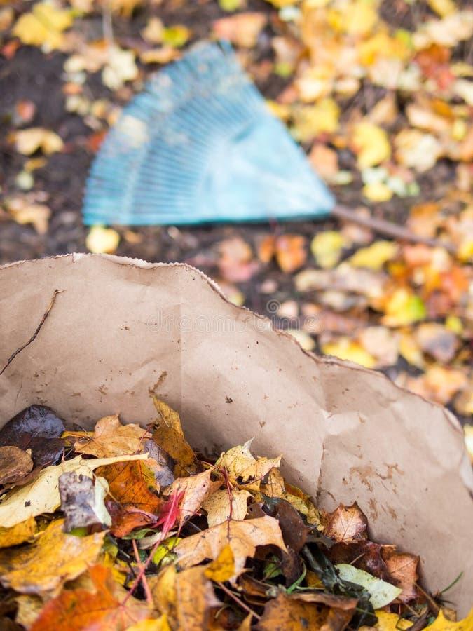 Het harken van dalingsbladeren stock afbeelding