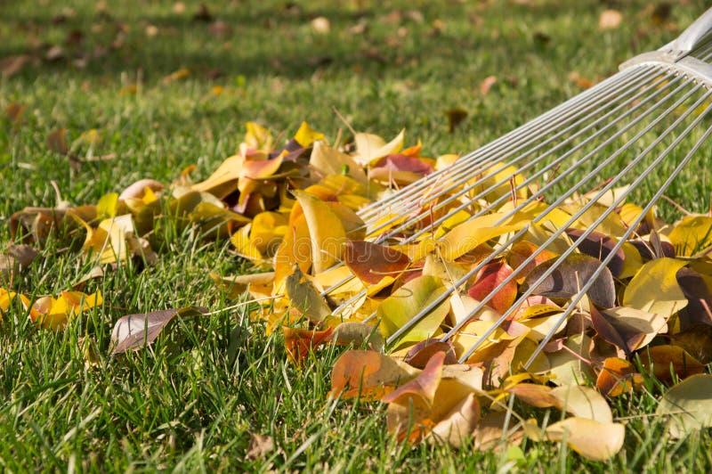 Het harken van de bladeren royalty-vrije stock foto