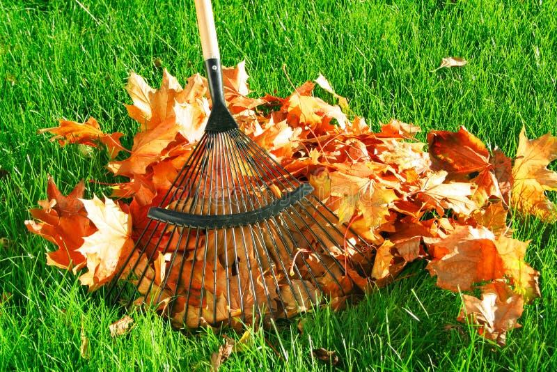 Het harken van de de herfstbladeren stock afbeelding