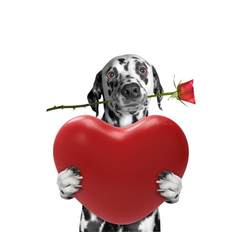 Het hart van de hondholding en nam toe stock fotografie