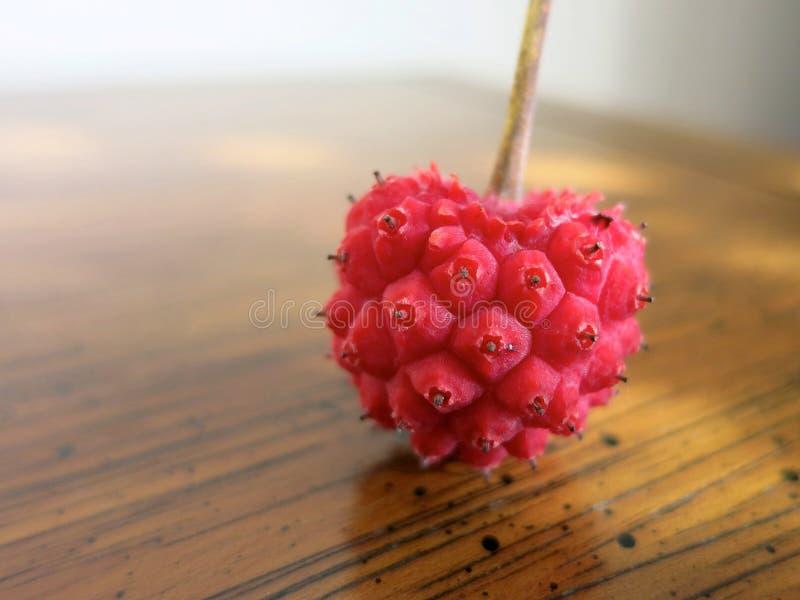 Het hart van de Kousakornoelje royalty-vrije stock foto