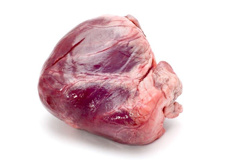 Het hart van het kalfsvlees stock fotografie