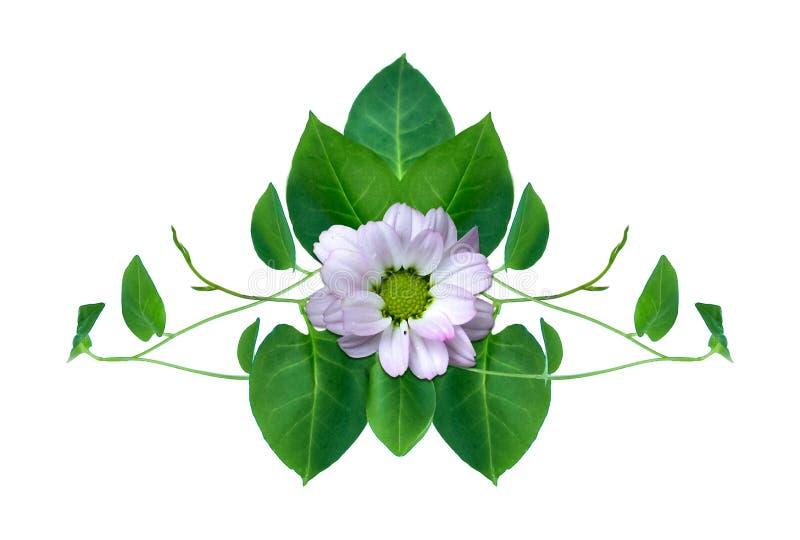 Het hart vormde groene bladeren verdraaide die de wildernisinstallatie van wijnstokkenliana op witte achtergrond wordt geïsoleerd vector illustratie