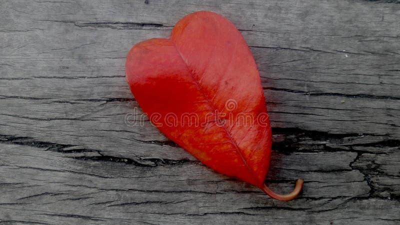 Het hart vormde rood blad stock afbeeldingen
