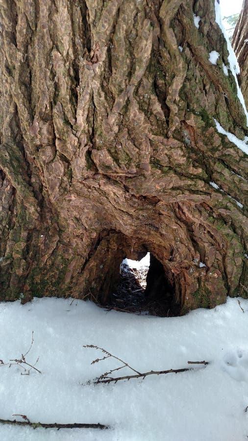 Het hartboom van het Alleganypark royalty-vrije stock fotografie