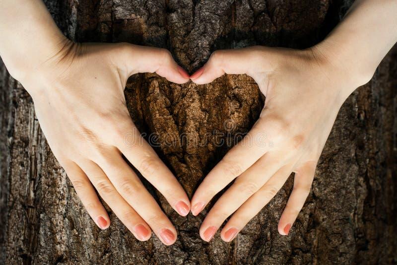 Het hartvorm van het Ecosymbool op een boomstam van boom royalty-vrije stock fotografie
