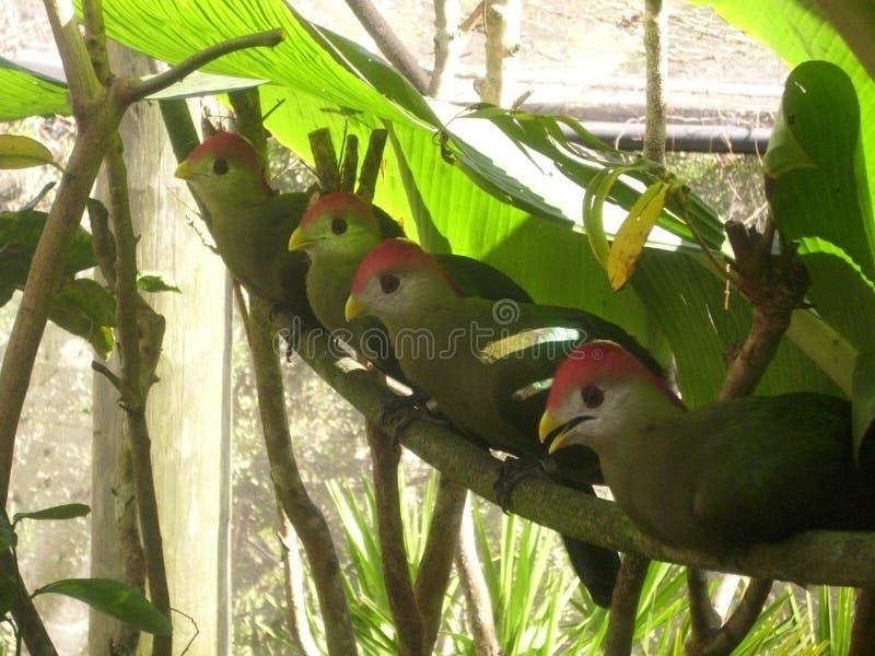 Het hebben van een mening van het vogelsoog stock fotografie