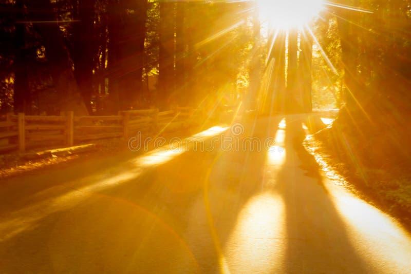 Het heldere gouden zonlicht glanst door bomen op een landweg stock fotografie
