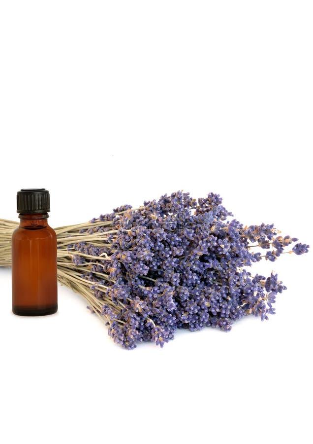 Het Helen van de lavendel Kruid royalty-vrije stock afbeeldingen
