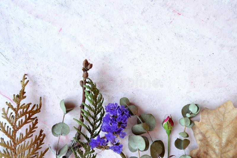 Het herbarium van eucalyptus, eiken blad, nam en naaldboom op de roze concrete achtergrond toe royalty-vrije stock afbeelding