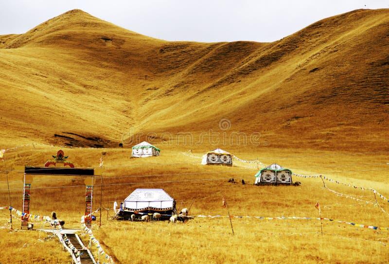 Het Herfstlandschap van het Plateau van Qinghai - van Tibet stock afbeeldingen