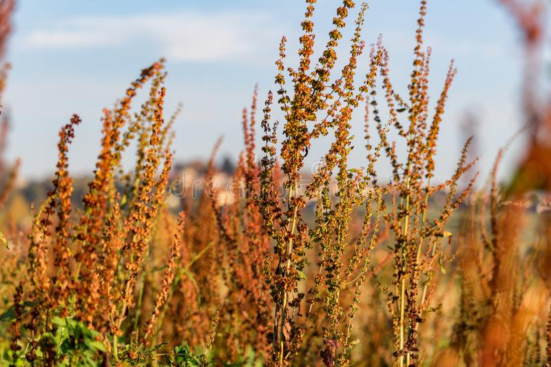 Het hoge droge de herfstgras met blured achtergrond stock foto's