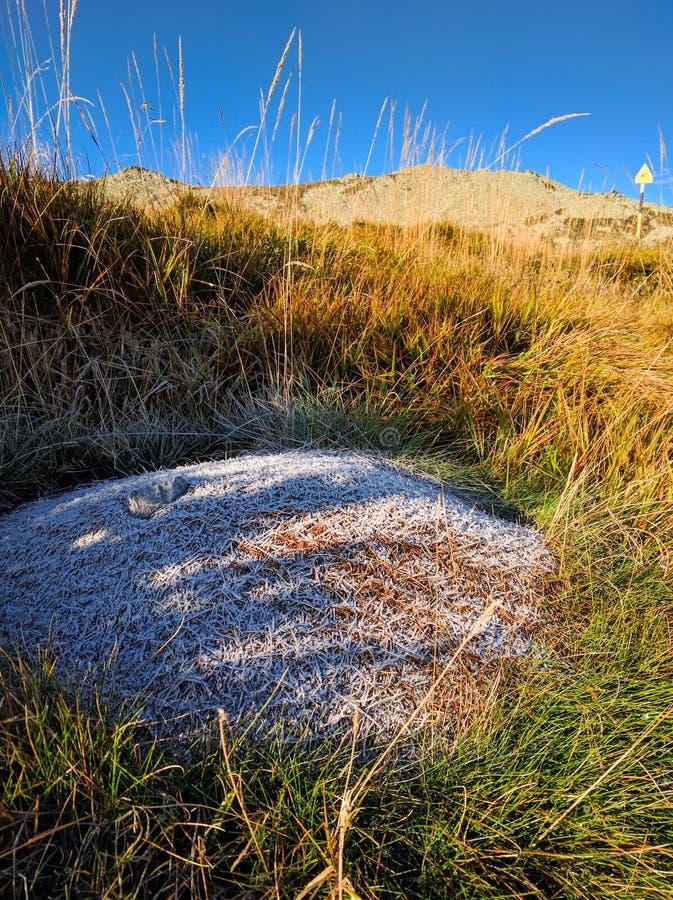 Het hoge nest van bergmieren stock fotografie