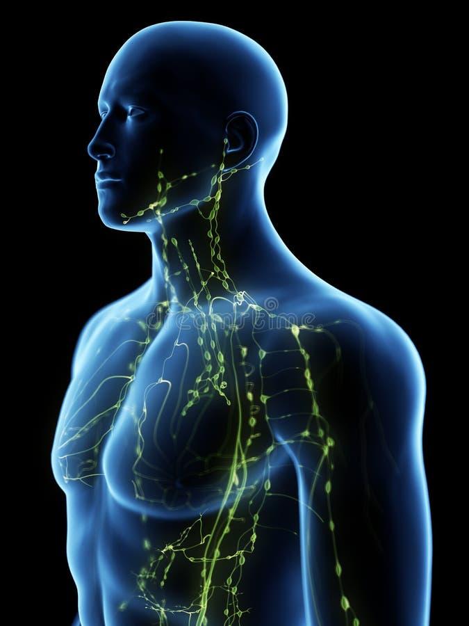 Het hogere lymfatische systeem royalty-vrije illustratie