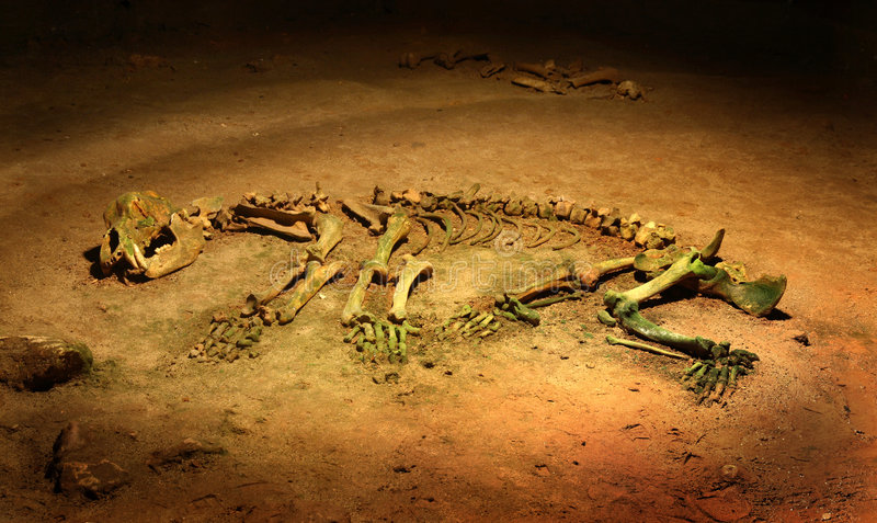 Het hol draagt - spelaeus Ursus - skelet stock foto