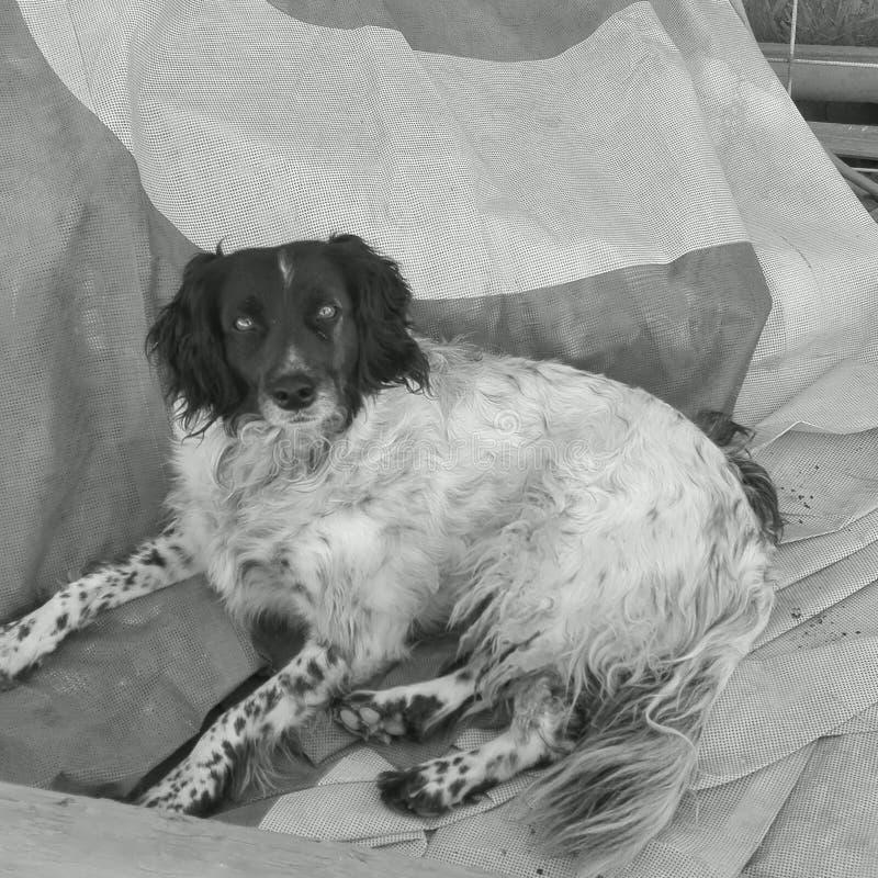Het hond-leven royalty-vrije stock afbeelding