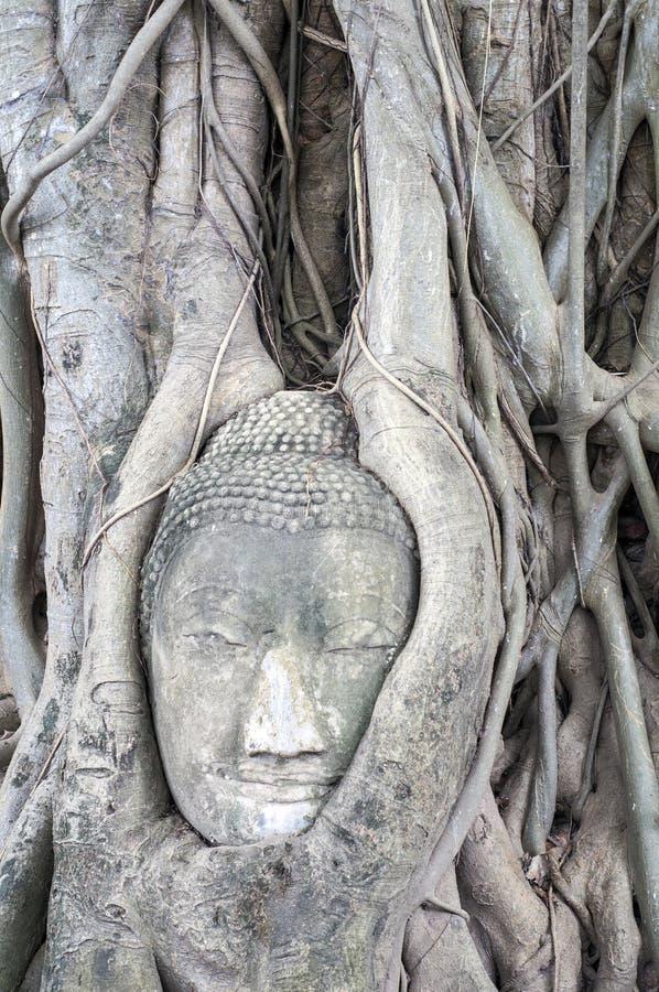 het hoofd van ฺีBuddha in de boom stock afbeeldingen