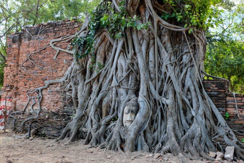 Het hoofd van Boedha in boomwortel in Mahathat-tempel De beroemde tempel Ayutthaya Thailand royalty-vrije stock foto