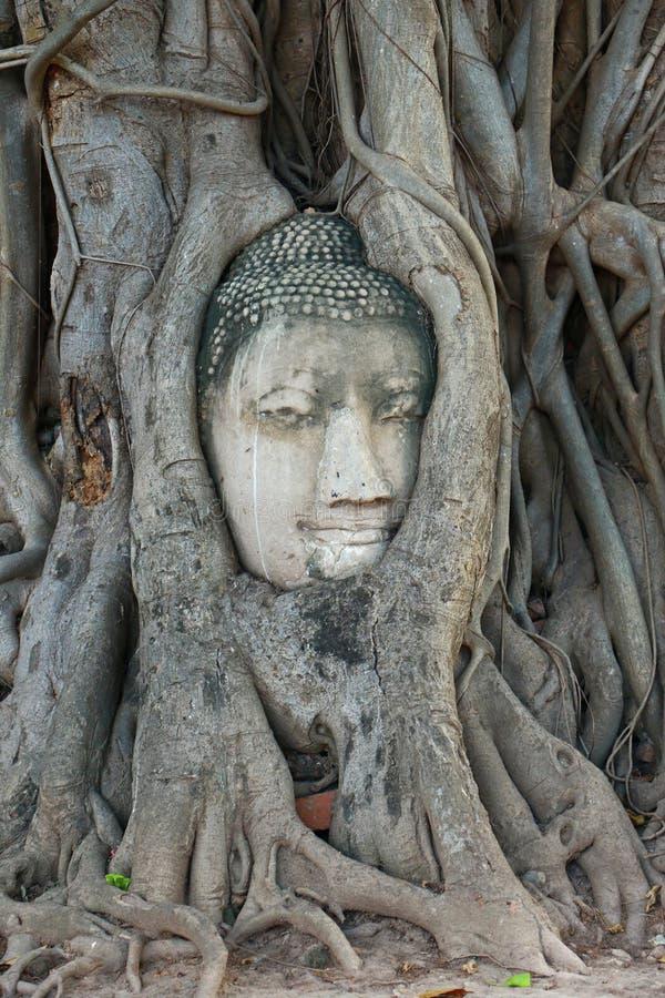 Het Hoofd van Boedha in Boomwortels, Wat Mahathat, Ayutthaya stock foto