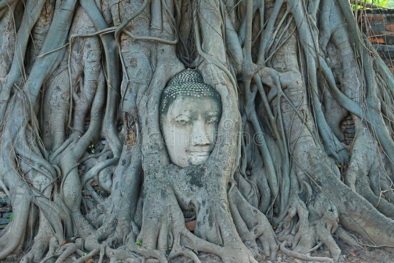 Het Hoofd van Boedha in Boomwortels, Wat Mahathat, Ayutthaya stock foto's