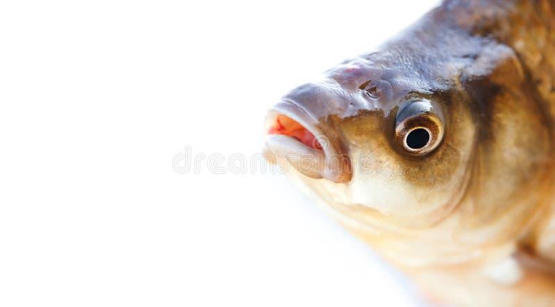 Het hoofd van Carassiusvissen, taexturefoto van de schalenhuid Macro de karper geschubd patroon van meningscrucian Selectieve nad royalty-vrije stock foto