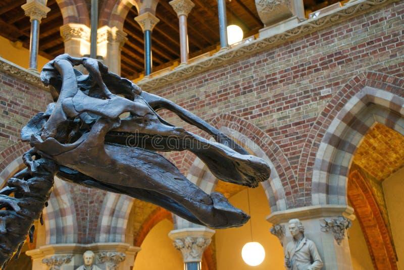 Het hoofd van de dinosaurus stock afbeelding