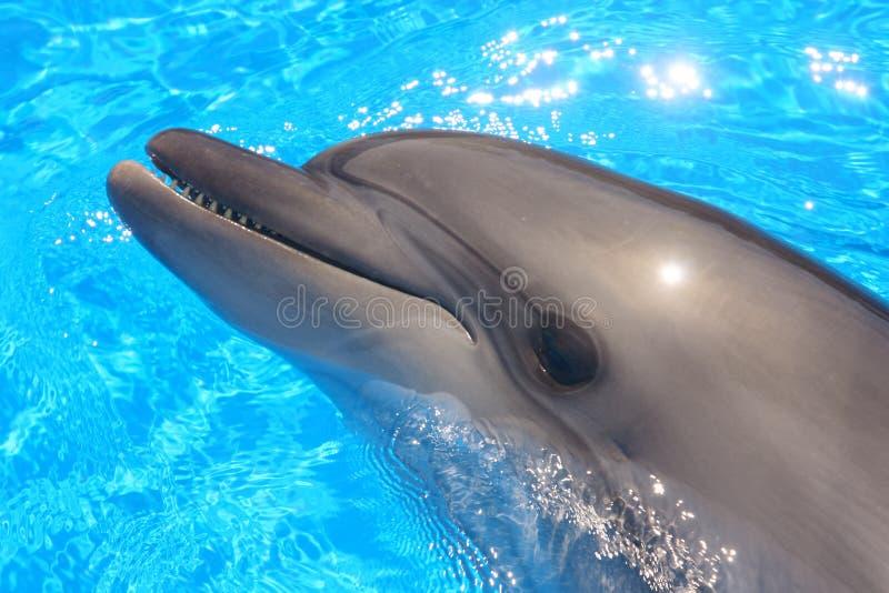 Het Hoofd van de dolfijn - de Foto van de Voorraad stock afbeelding