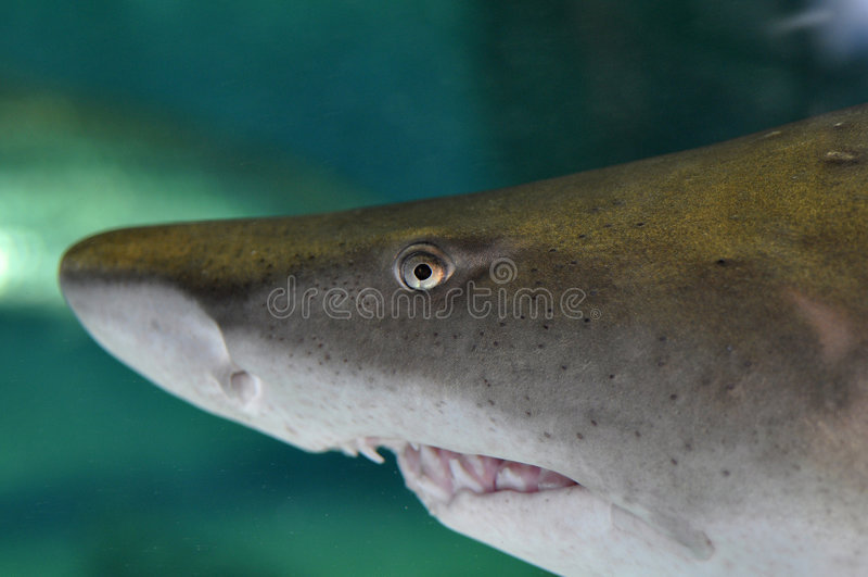 Het hoofd van de haai stock foto's