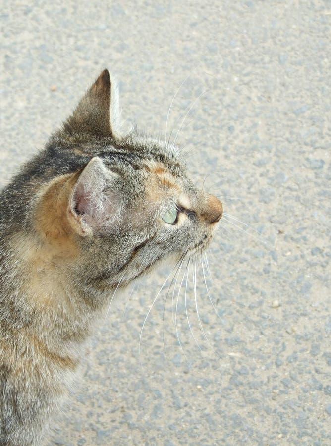 Het hoofd van de kat royalty-vrije stock fotografie