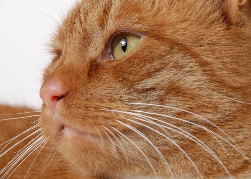 Het hoofd van de kat stock afbeeldingen
