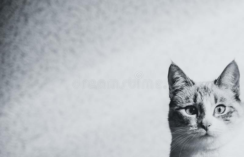 Het hoofd van de nieuwsgierige kat op geweven muurachtergrond, beschikbare ruimte stock afbeeldingen