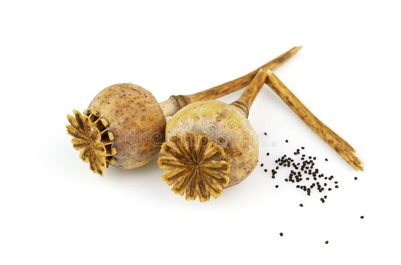 Het hoofd van de papaver met zaden stock afbeeldingen