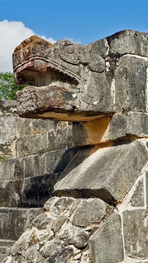 Het hoofd van de slangsteen in de wildernis van Yucatan royalty-vrije stock foto