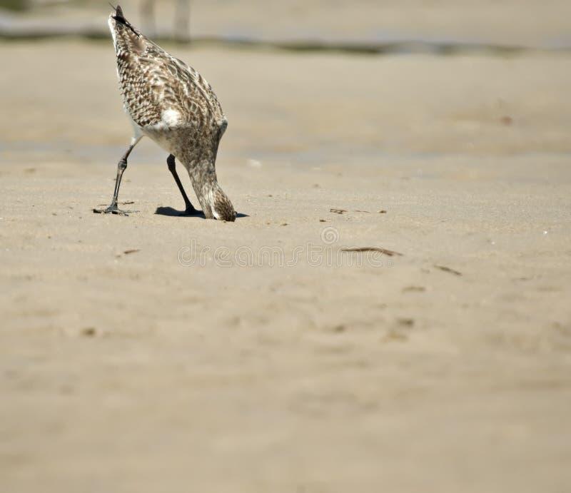 Het hoofd van de vogel in het zand   royalty-vrije stock afbeelding