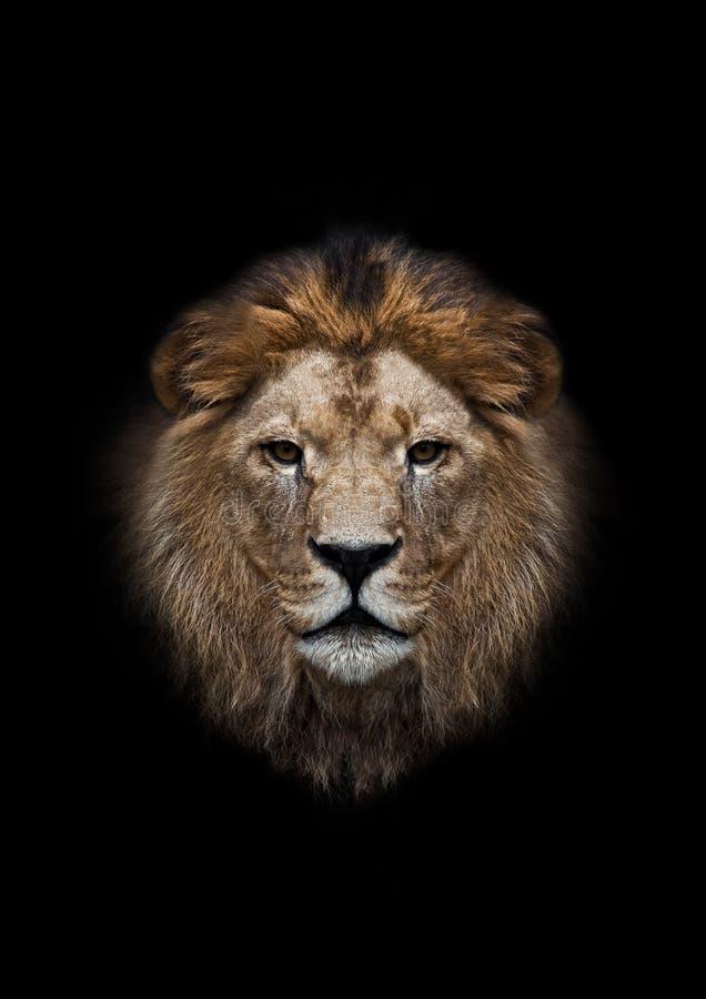 Het hoofd van een leeuw stock foto