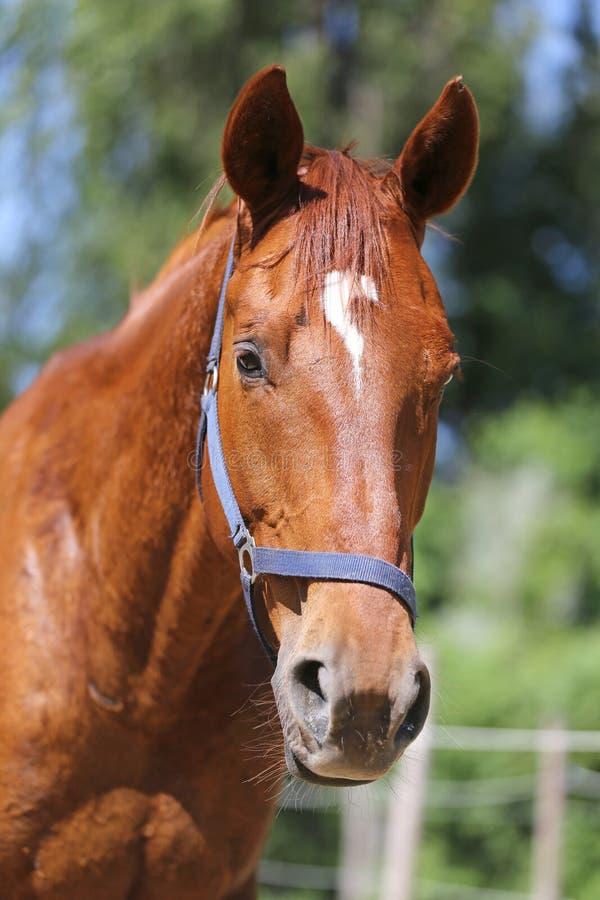 Het hoofd van een mooi jong sportpaard in drijft in openlucht zomer bijeen royalty-vrije stock foto