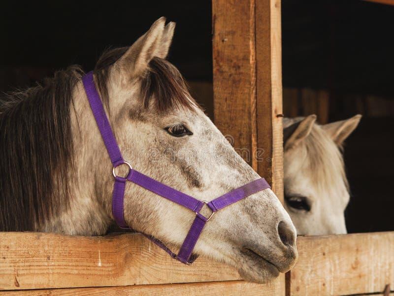 Het hoofd van een paard kijkt uit op de straat van een houten box royalty-vrije stock afbeelding