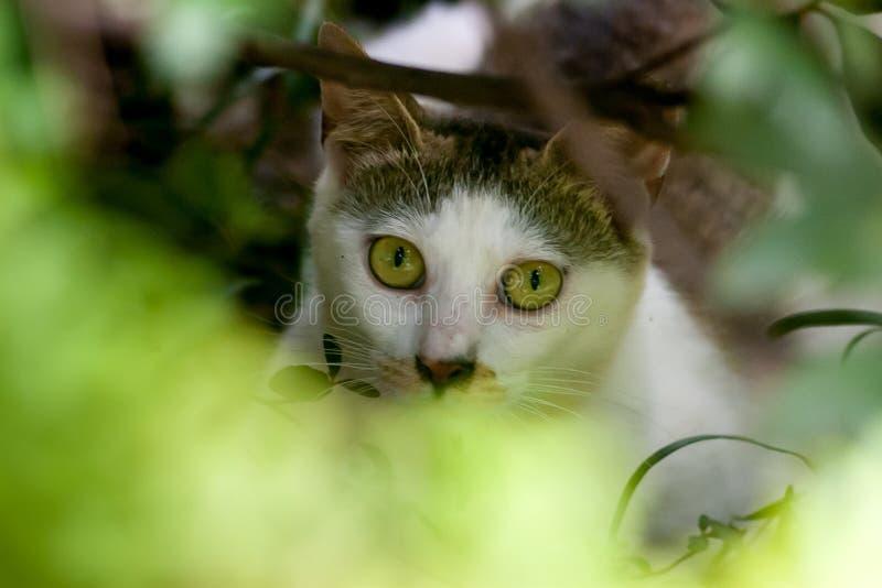 Het hoofd van een verdwaalde kat stock fotografie